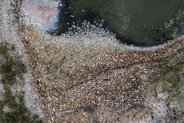 Οικολογική καταστροφή: Χιλιάδες νεκρά ψάρια στις όχθες της Κορώνειας