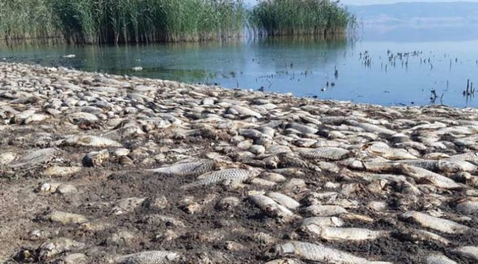 Θάνατος ψαριών στην λίμνη Κορώνεια από ασφυξία