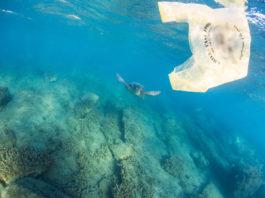 Περιβαλλοντικές οργανώσεις : Το Υπουργείο Περιβάλλοντος δεν αντιμετωπίζει σωστά τις πλαστικές σακούλες
